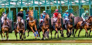 Horse Racing 451 by JullelinPhotography