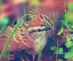 here's a picture of a bird by Spifmo
