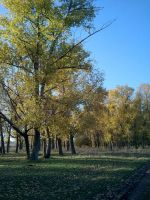 The copse by AnnAntares