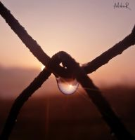 morning drops by ad-shor