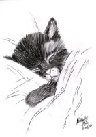 Sleeping Kitty by teran80