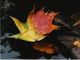 Fall Leaves by sacredspace