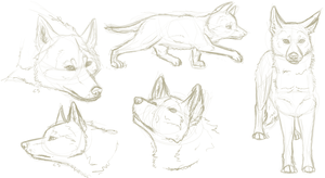 Husky Sketches by thefireflii