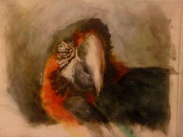 Macaw (old one) by ApeSpacer