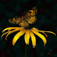 Black Eyed Butterfly by hydraa