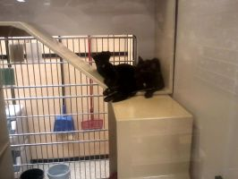 petsmart spring hill tn catof the day 6/14/13 by michelous