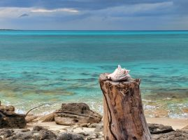 Conch shell by peterpateman