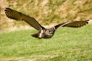 Low Flying by Simon-P