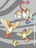 Pidgey, Pidgeotto, Pidgeot and Mega Pidgeot by Millyoko