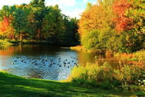 Stock: Duck Pond by Celem