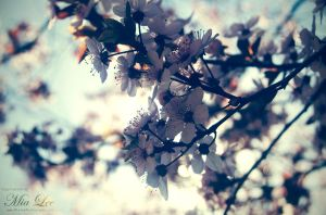 Spring Blossoms by MiaLeePhotography