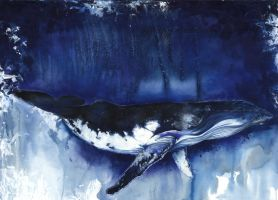 Humpback Whale by amp1234