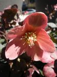 Parkway Flower by citynetter