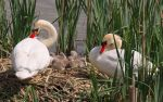 Our nest (2) by starykocur