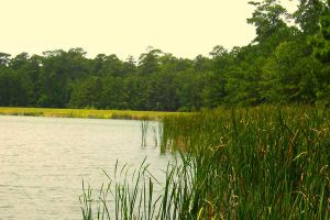 Lake Tombigbee by Bluegalleon