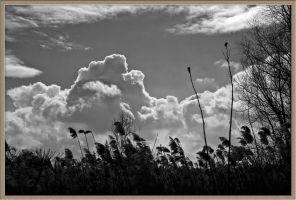 Clouds and marsh by saltov-man