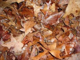 Leafs May Fall by the-vicious-poet