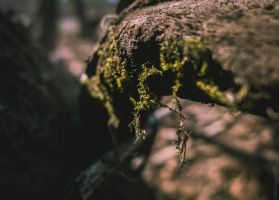 HANGING MOSS by GRfotography