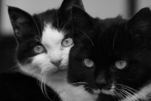 Two cats by Alena-Koshkar