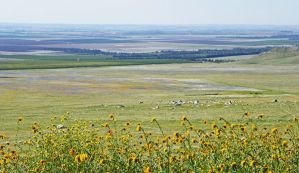 Spring Patchwork in the Central Valley by Synaptica