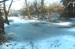 The frozen puddle by jackinnes