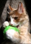 My Ball by Aoxa-Cats