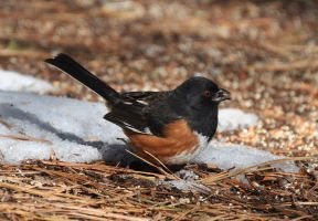 Happy the Snow is Melting by Tailgun2009