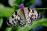 Butterfly BW by TinyCueCard