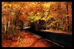 Connecticut Fall III by lucky008