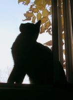A Cat Silhouette by JocelyneR
