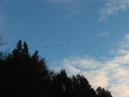 Faraway Vultures by abuseofstock