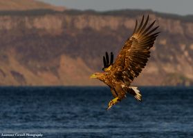 Fly like an eagle, let your spirit run free by LordLJCornellPhotos
