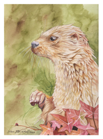 River Otter by DawnstarW
