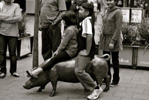 Pig riding in Adelaide by dantordjman