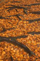 Leaf Litter by PastyGuy