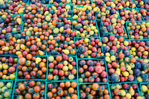 tomatoes_ by T-a-g-g-e-r