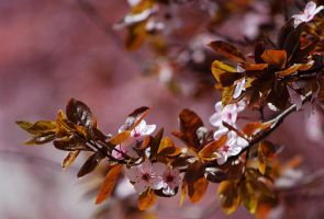 Pink Spring by christie1793