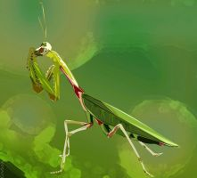 Praying Mantis by kaolincash