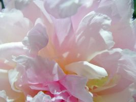 Peonies Stock 12 by Retoucher07030