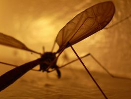 Crane Fly Wing by Eris-stock