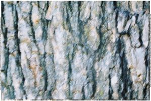 Bark Texture 4 by webgoddess