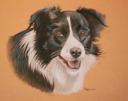 Border Collie Lady by Melli81
