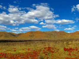spinifex fields by piskky