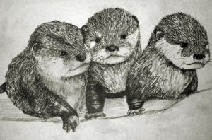 Baby Otters pencil study by Gemneroth