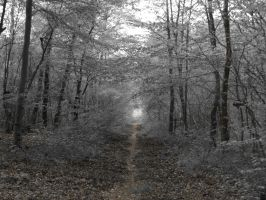 forest tunnel by sleepneverend