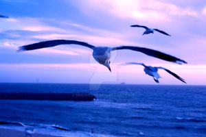 Flying into the sunset.. by meeshel99