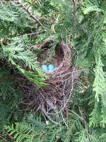 Blue Eggs 2 by fairybeliever87