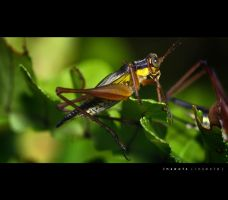 Insect - Photo 1 by blookz