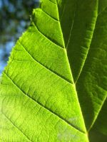 Leaf by niggle by Starfishinablender