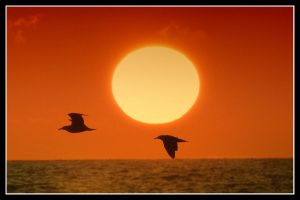 Gulls in Sea Sunset by kanes